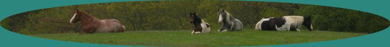 Horses long